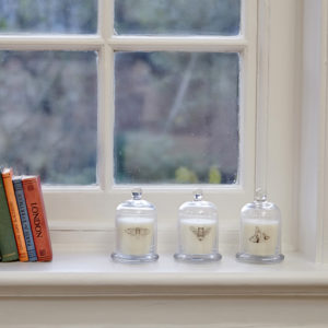 Three glass cloches on windowsill