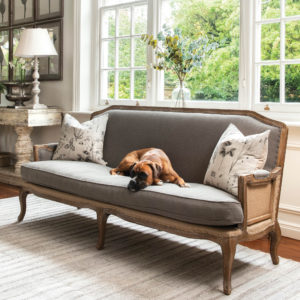 French style sofa with boxer dog
